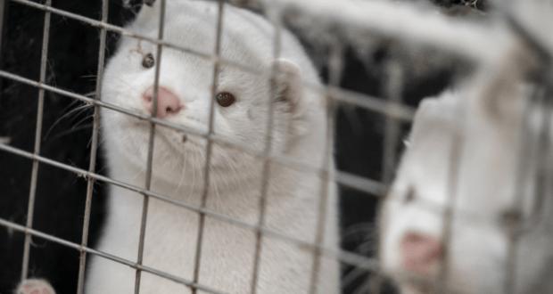 Болеют ли животные коронавирусом? Скоро не будут